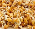 Magnesiummangel Ernährung Weizenkeime